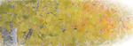 Aspen-Leaves-_3-for-web