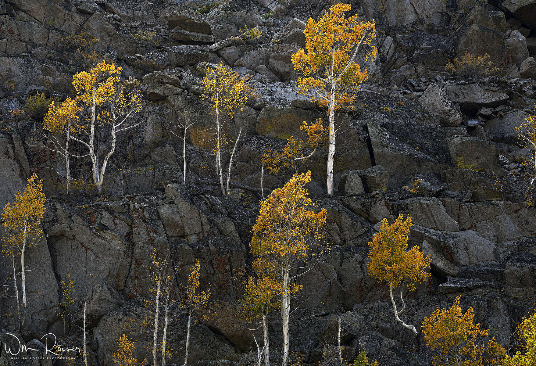 Aspen-and-Rock-for-Web-