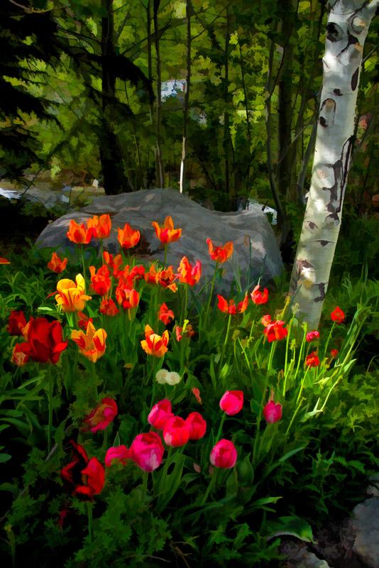 Aspen-and-Tulips-18x20