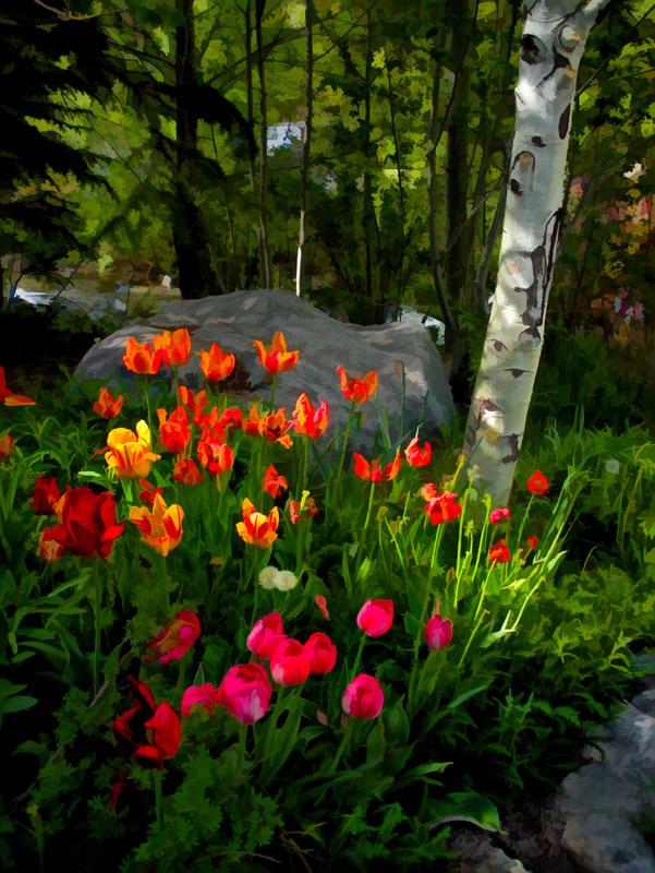 Tulips blooming near Provo River in Utah