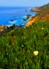 Carmel_Highlands__3_TPZ