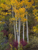 Eastern-Sierra-Tree-Grouping-for-Neon-Sky-200dpi