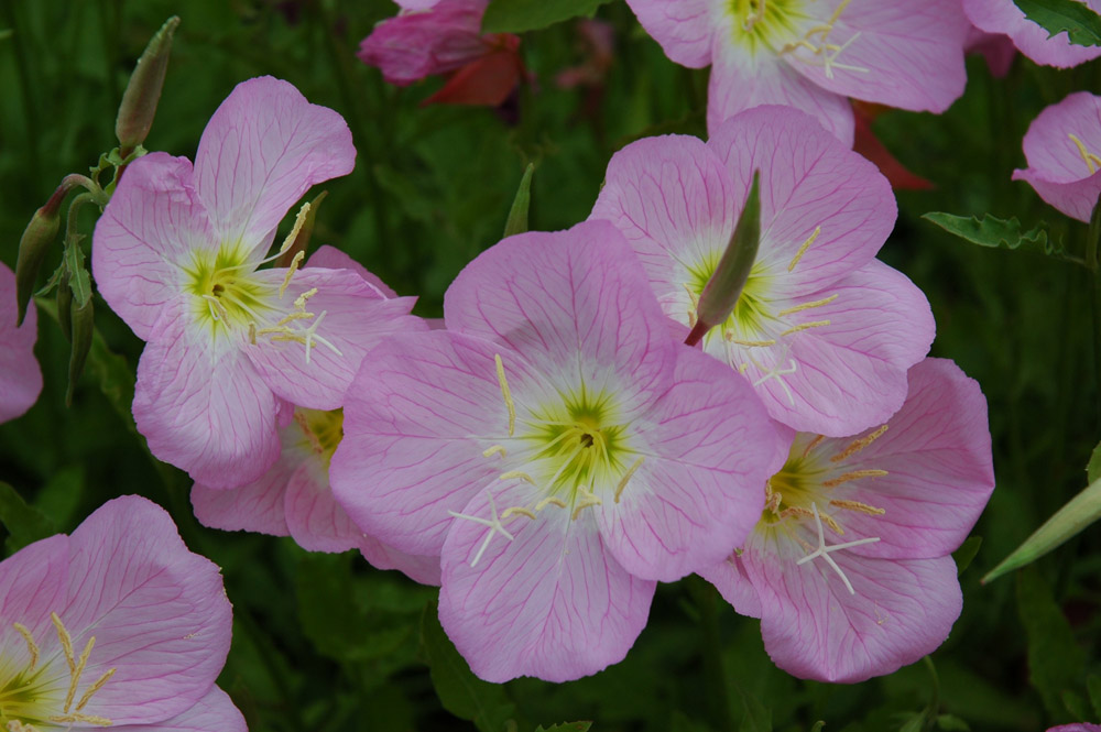 Flower_1_VanBeurden