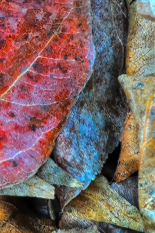 HDR-TPZ-Fall-Leaves-_1