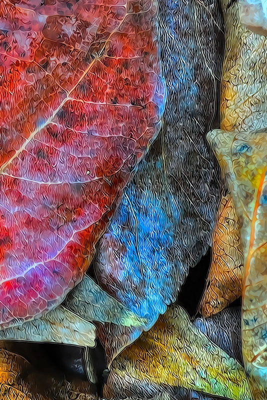 HDR-TPZ-Fall-Leaves-_2-_12x18_