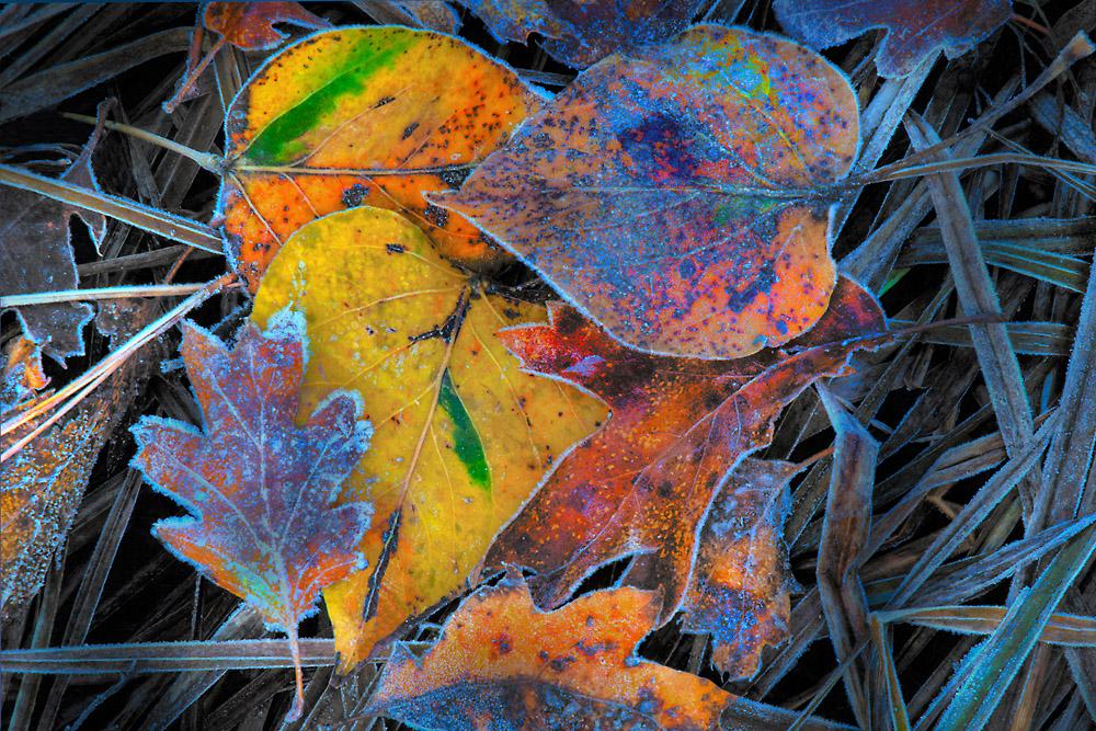 Layered-Fall-Leaves-in-Yosemite-4x6__2