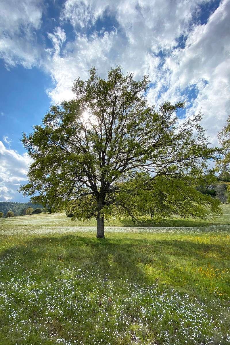 Longbarn-meadow---brighter-for-web