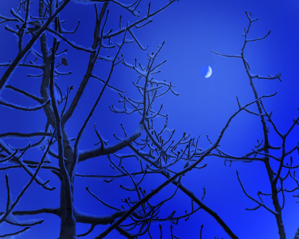 Birch trees glow on moonlit night