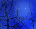 Moon_over_Aspen_Trees__6_2