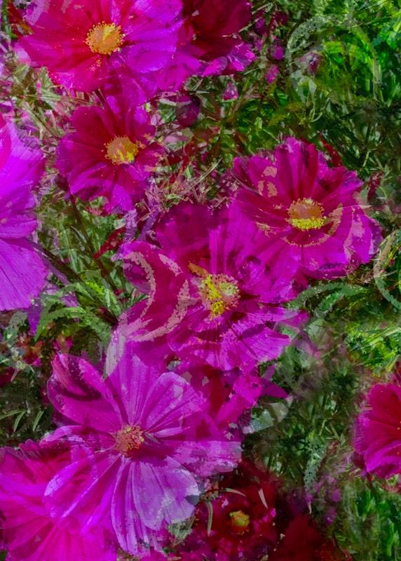 Oregon-Flowers-_2_5x7_2