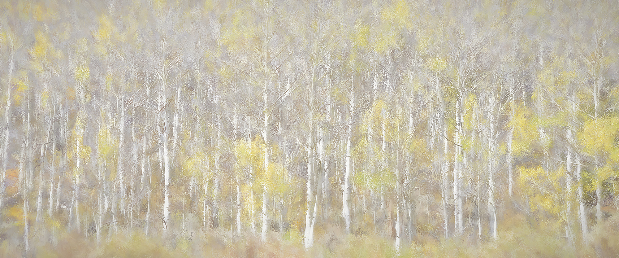 Painted-Aspen-for-Web