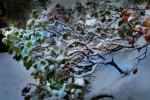 Snow-and-Manzanita-TPZ