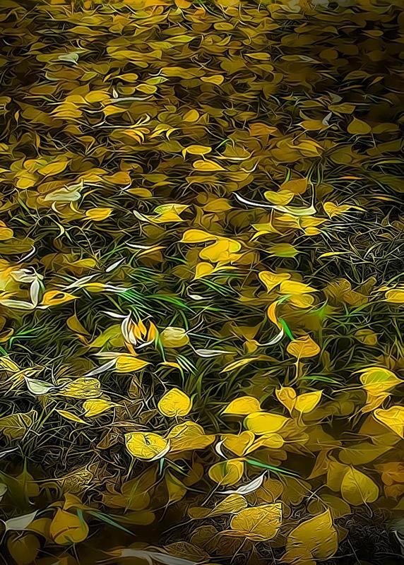 Yellow-Yosemite-Leaves-_TPZ