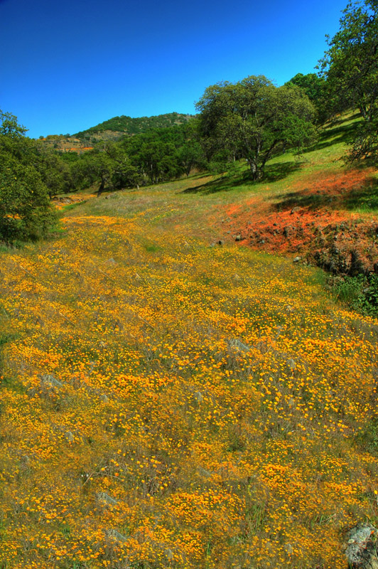 Yellow_Flowers_on_Watts_Valley_Road_Rev_3