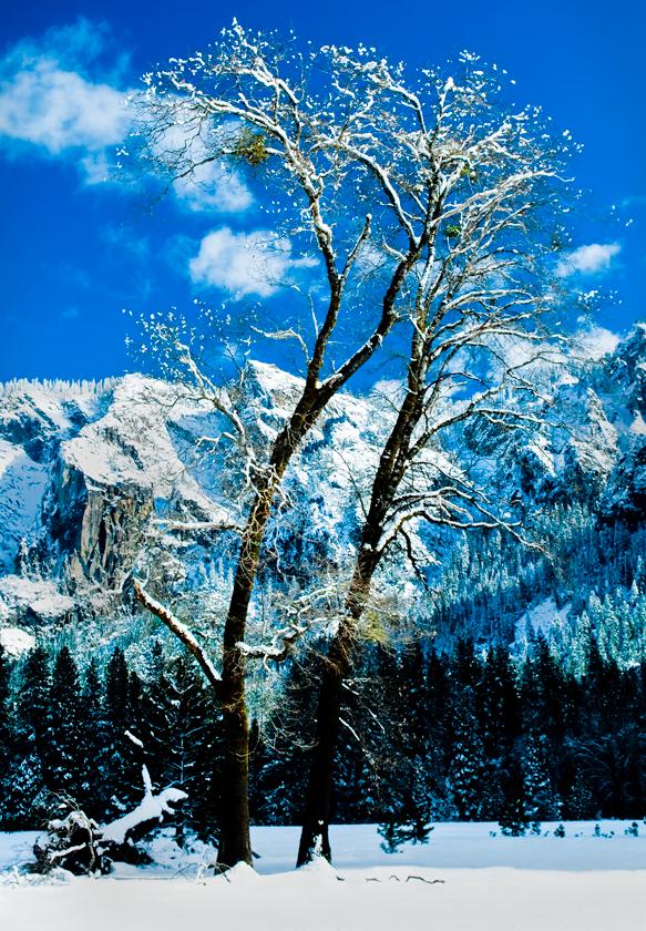 YosemiteOak140dpi