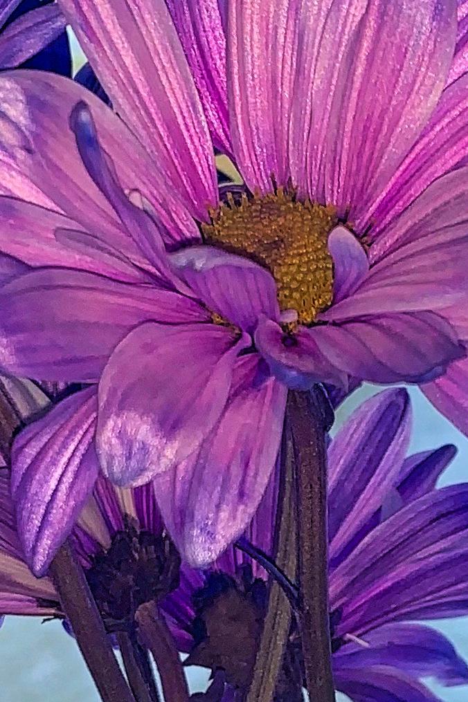 pink-flower-from-Bend-Restaurant