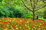 poppys-4x6-for-web