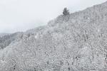 snow-tree-park-city-2-for-Web