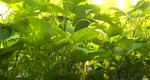 Laarakker groente verwerking