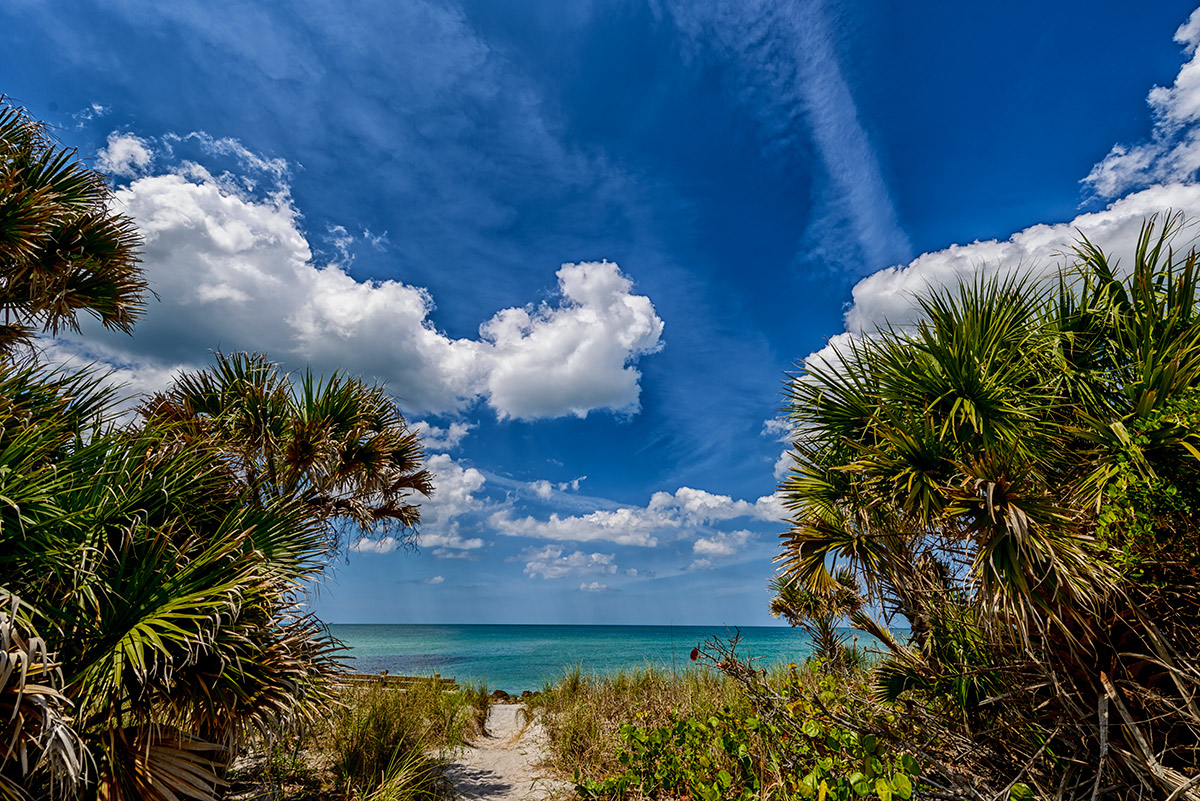 Venice, Florida, USAImage No: 13-014103   Click HERE to Add To Cart