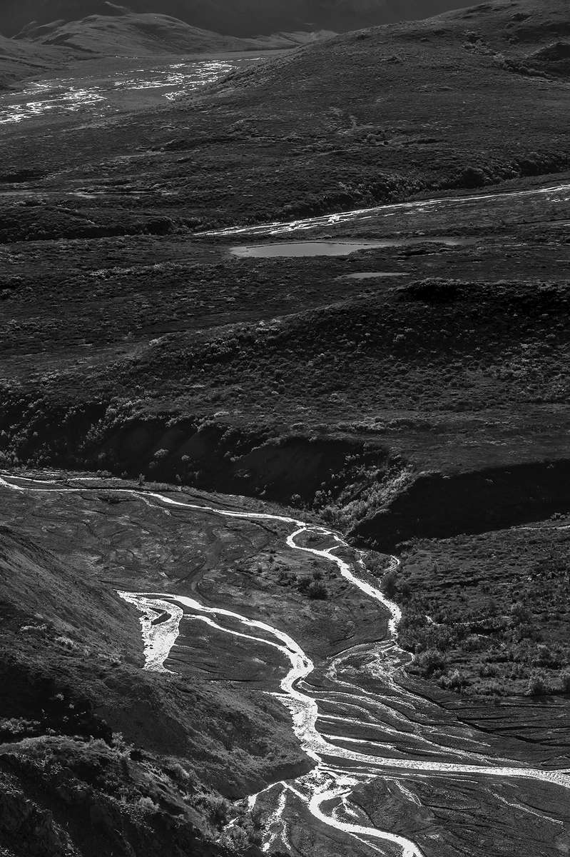 Denali National Park Road, AlaskaImage no: 16-310307-bw   Click HERE to Add to Cart