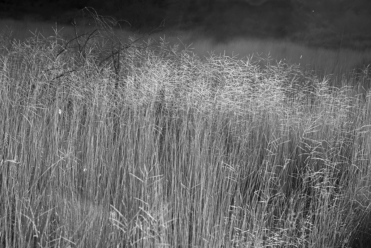 Landscapes from Dripping Springs Hiking Trail, Organ Mountains,Image no: 17-020764-bw  Click HERE to Add to Cart