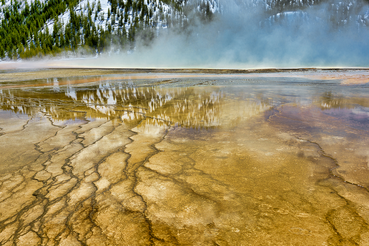 Winter Landscape and wildlife photographs from Yellowstone National Park, WY, USAImage No: 17-005916   Click HERE to Add to Cart