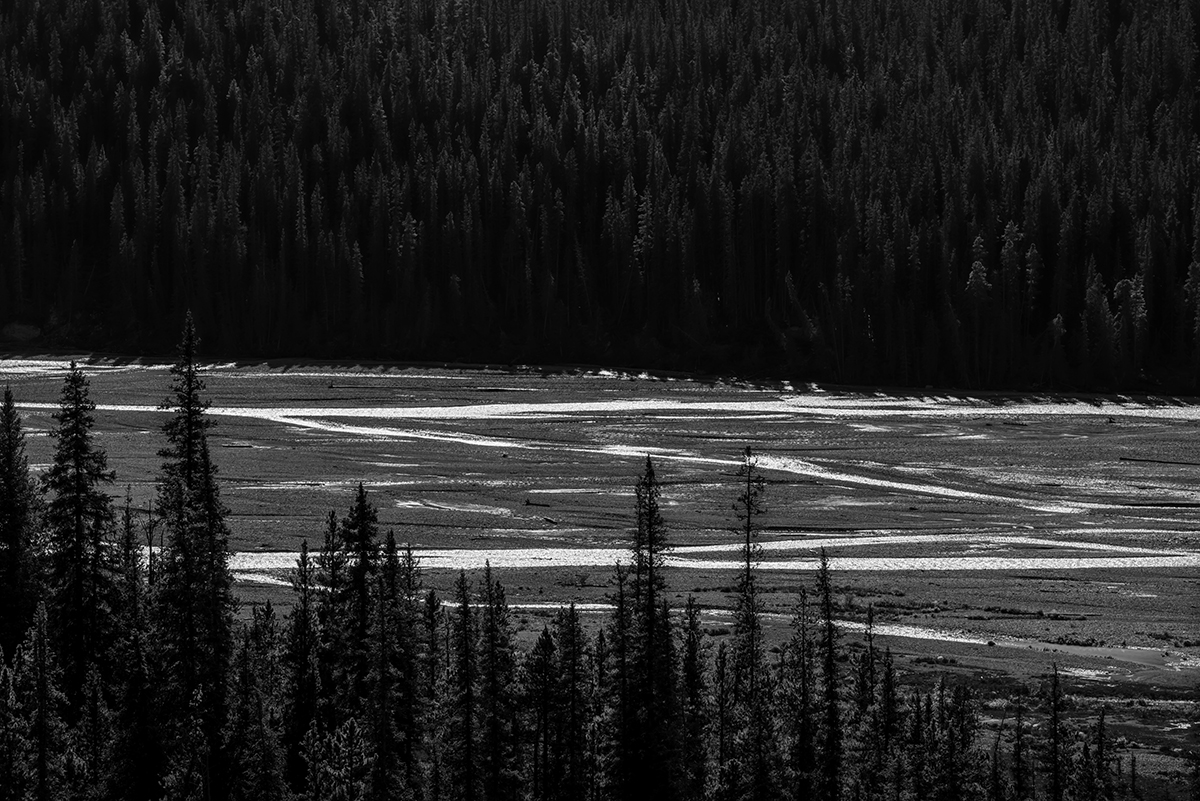 Ice Fields Parkway (Highway 93), AlbertaImage no: 16-383563-bw  Click HERE to Add to Cart