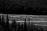 Ice Fields Parkway (Highway 93), Alberta, CanadaImage no: 16-383563-bw  Click HERE to Add to Cart