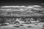Desert Mountain Landscapes from California(Yucca brevifolia)Image No: 16-002562-bw  Click HERE to Add to Cart