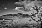 Desert Mountain Landscapes from California(Yucca brevifolia)Image No: 16-002784-bw  Click HERE to Add to Cart