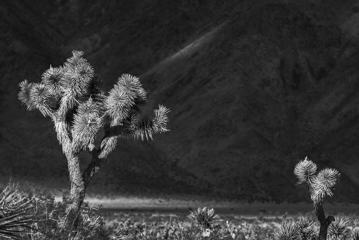 Desert Mountain Landscapes from California(Yucca brevifolia)Image No: 16-002796-bw  Click HERE to Add to Cart