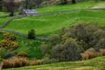Color photograph and fine art print and canvas gallery wrap  of verdant pastures, sheep and lambs during the lambing season i the English Lake District National Park