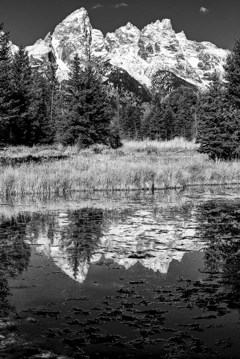 Morning Reflection in front of the Grand TetonsImage no: 17-017633-bw   Click HERE to Add to Cart