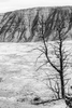 Winter Landscape and wildlife photographs from Yellowstone National Park, WY, USAImage No: 17-009029-bw   Click HERE to Add to Cart
