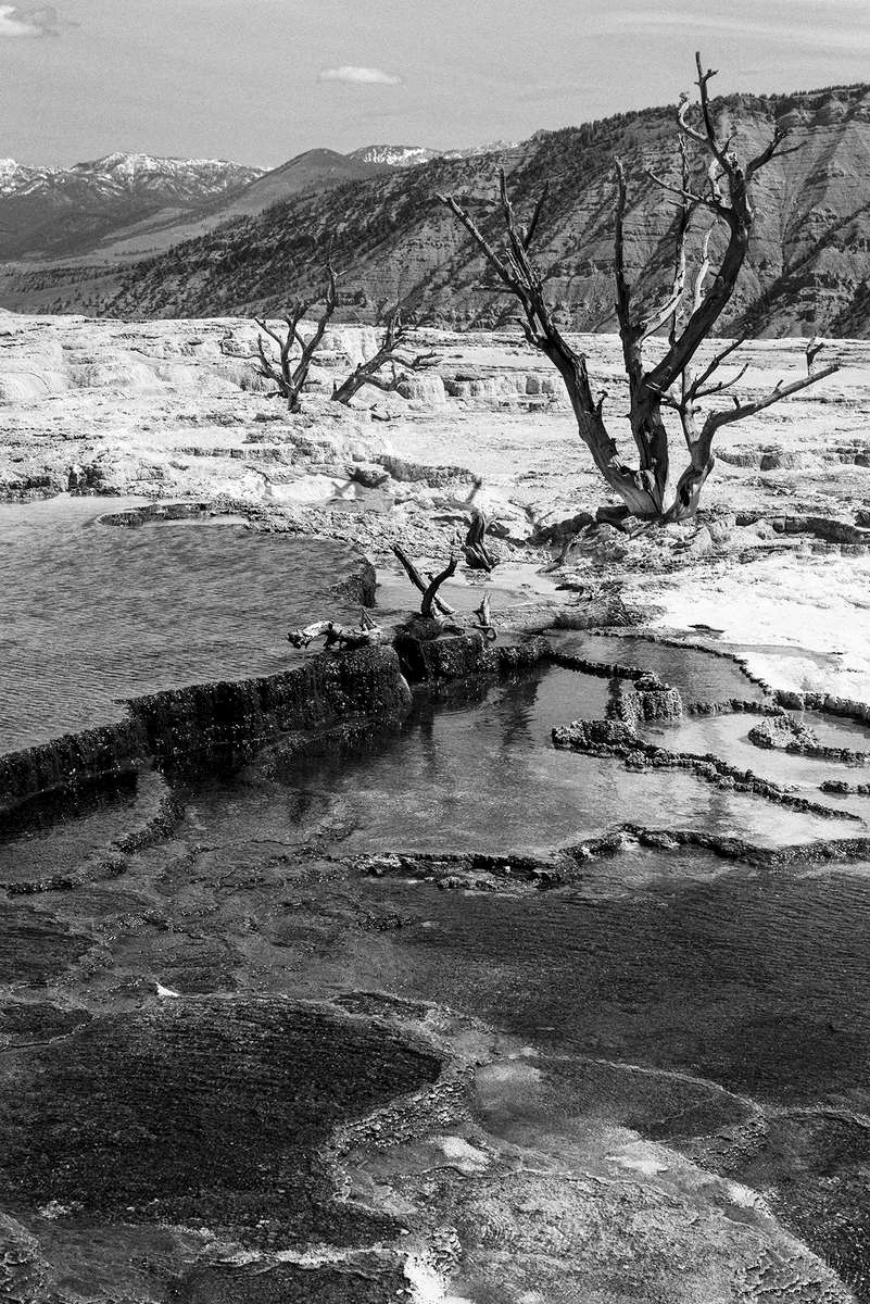 Winter Landscape and wildlife photographs from Yellowstone National Park, WY, USAImage No: 17-009078-bw  Click HERE to Add to Cart