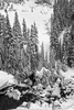 Landscape photographs of the Snow Covered Trees, WAImage no: 16-008806-bw   Click HERE to Add to Cart