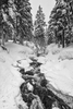 Landscape photographs of the Snow Covered Trees, WAImage no: 16-008812-bw   Click HERE to Add to Cart