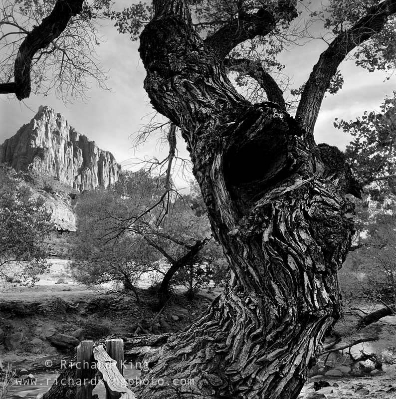 Zion National Park,Utah, USAImage no: 020821.11Click on link to add to carthttp://bit.ly/a274Kp