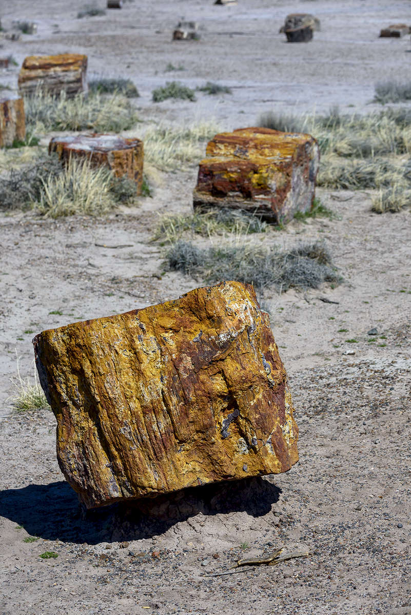 Holbrook, Arizona, USAImage No: 19-003212  Click HERE to Add to Cart