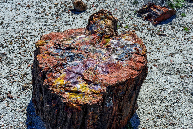 Holbrook, Arizona, USAImage No: 19-003291  Click HERE to Add to Cart