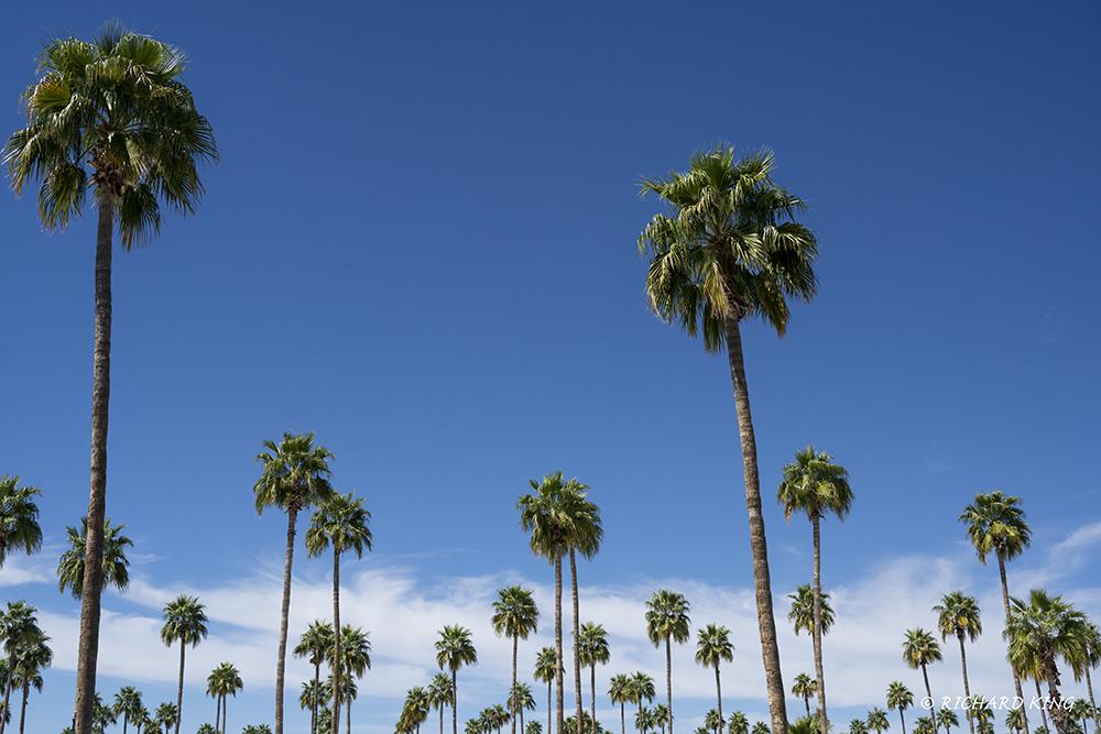 Mesa, Arizona, USAImage No: 20-002785Click HERE to Add to Cart