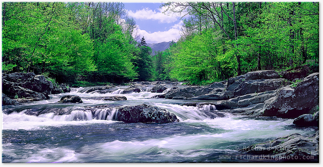 Greenbrier, Great Smoky Mountains National Park, Tennessee, USAImage no: 080514.1920  http://richardkingphoto.photoshelter.com/image/I0000fe4U693e