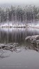 A snowy day in the Rockies,Rocky Mountain National Park, Colorado, USAImage no: 060596.14Click on link to add to cart  http://bit.ly/ayfhey
