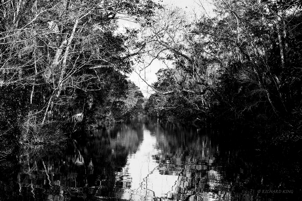 Homosassa Springs, Florida, USAImage No: 20-000321-bwClick HERE to Add to Cart