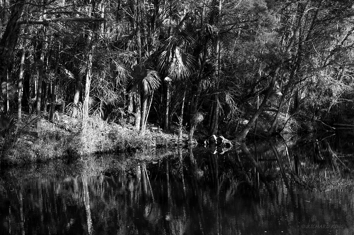 Homosassa Springs, Florida, USAImage No: 20-000338-bwClick HERE to Add to Cart