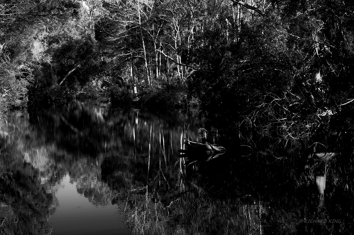 Homosassa Springs, Florida, USAImage No: 20-000348-bwClick HERE to Add to Cart