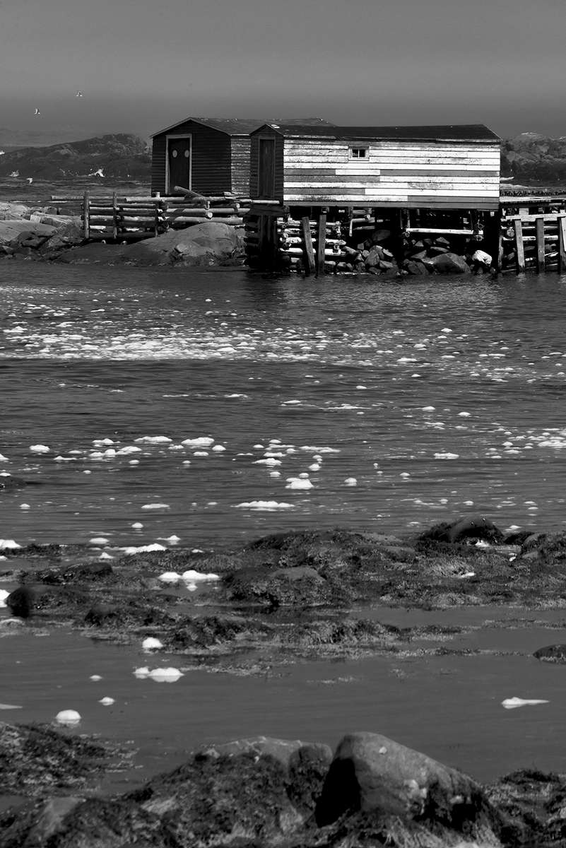 Newfoundland, CanadaImage no: 19-007475-bw  Click HERE to Add to Cart
