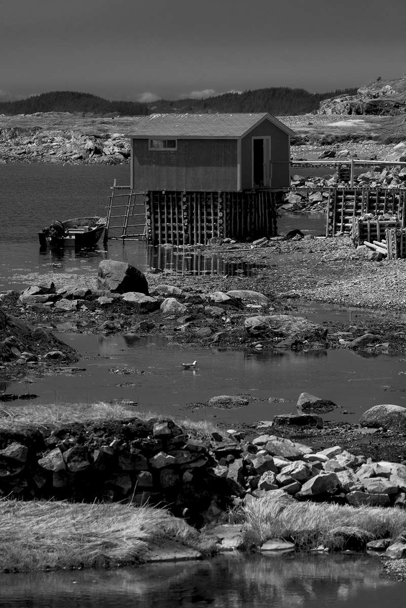 Newfoundland, CanadaImage no: 19-007658-bw  Click HERE to Add to Cart