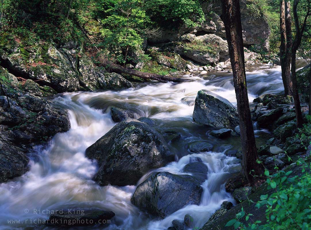 Great Smoky Mountains National Park, Tennessee, USAImage no: 080494.0106  Click HERE to add to cart